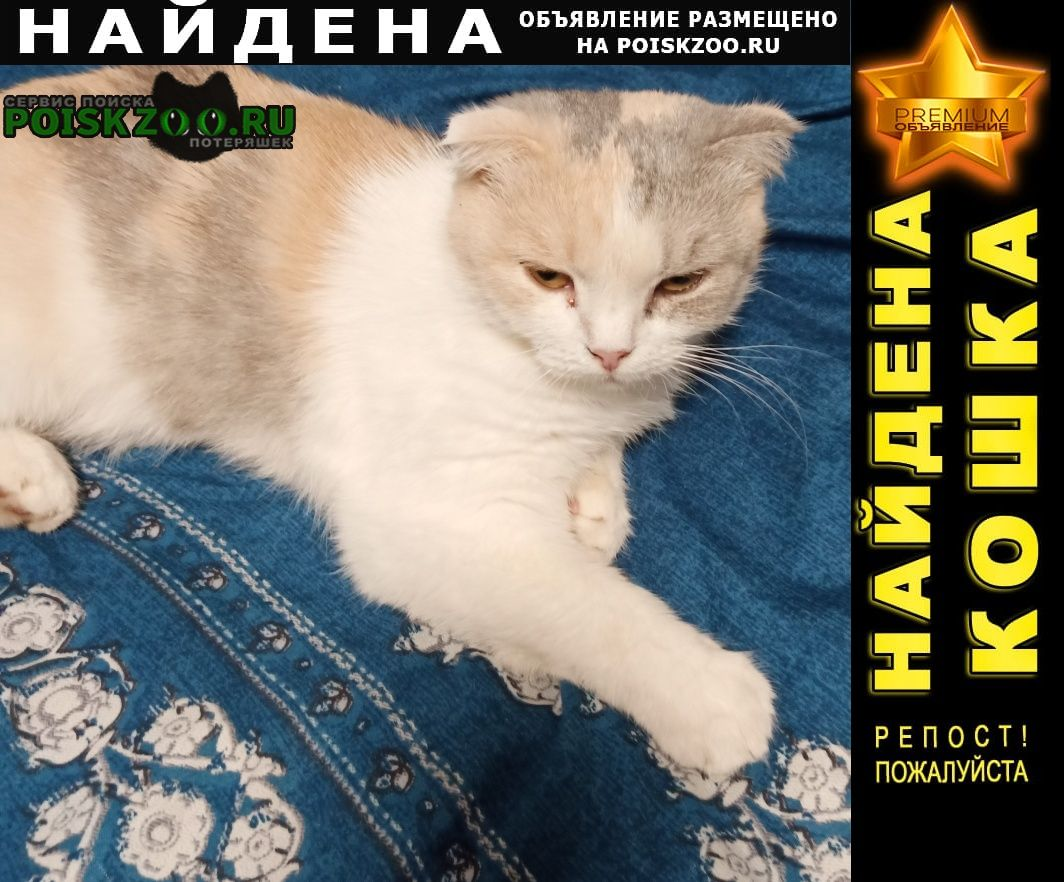 Найдена кошка на ольги форш 17 кошечка Санкт-Петербург