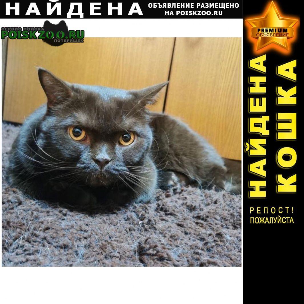 Найден кот серый Химки