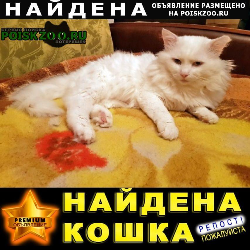 Найден кот, деревня пенкино Луховицы