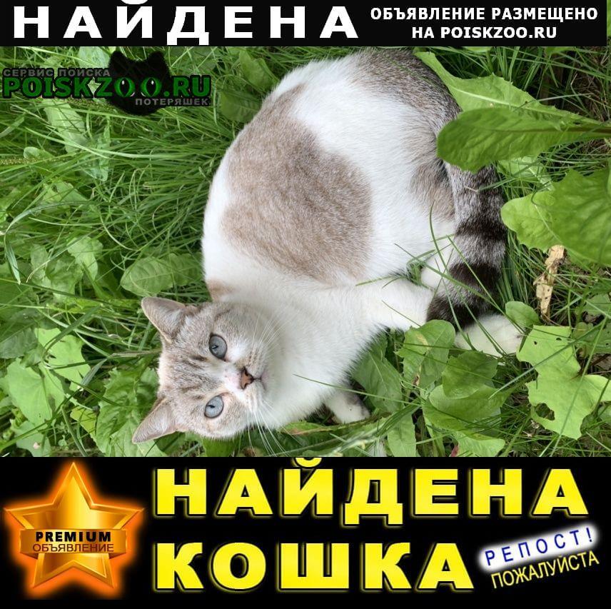 Найдена кошка в снт минерал, Одинцово