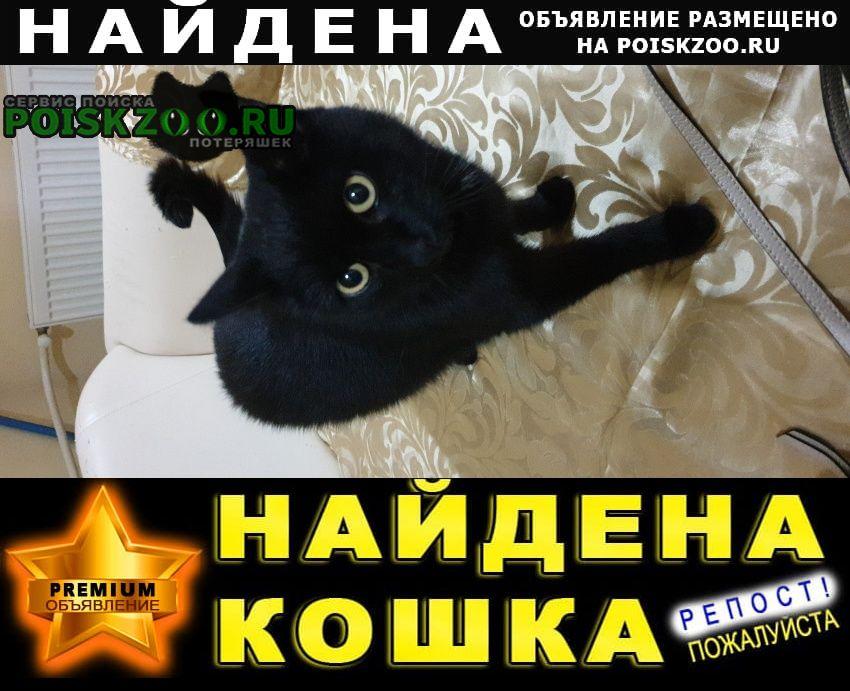 Найден кот черный Видное