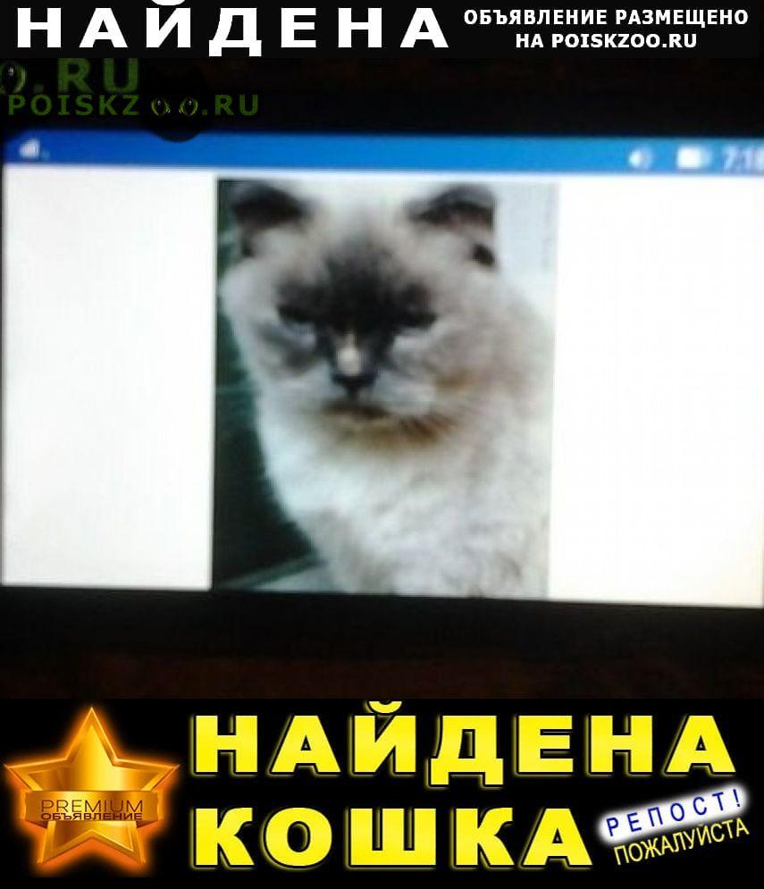 Найдена кошка г.Волоколамск
