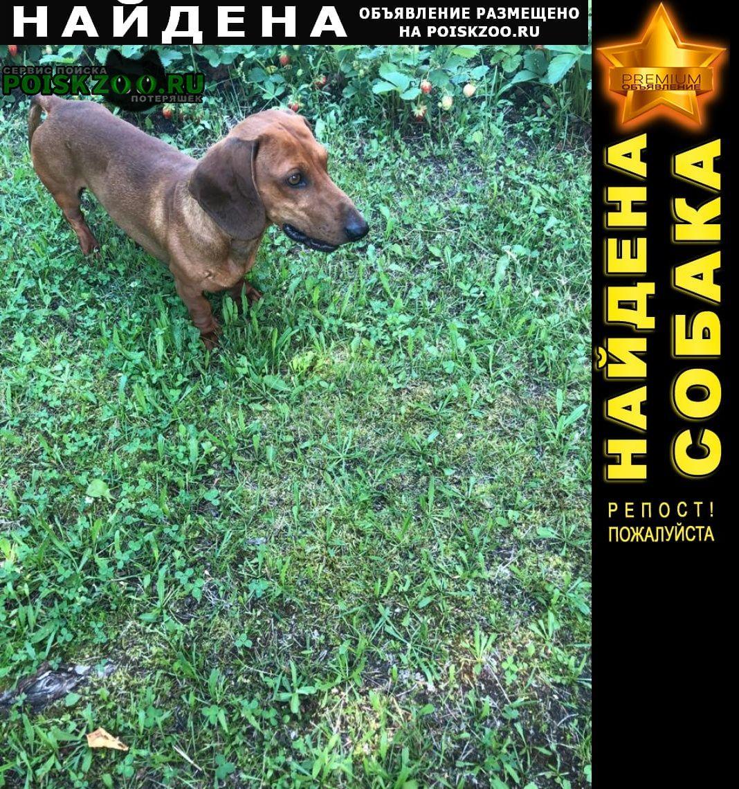 Найдена собака кобель нашли в районе долгуша Шатура
