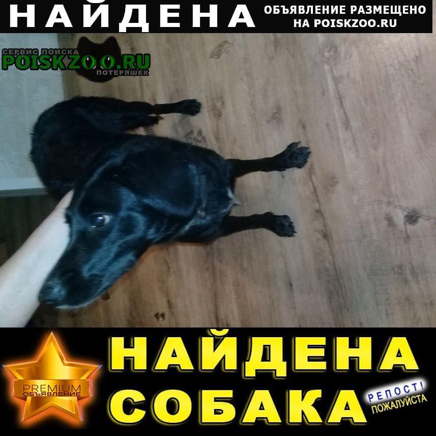 Найдена собака находится на б-р.ак.королева д 10 Нижний Новгород