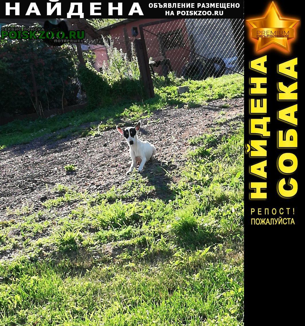 Найдена собака белая с черными пятнами Коломна
