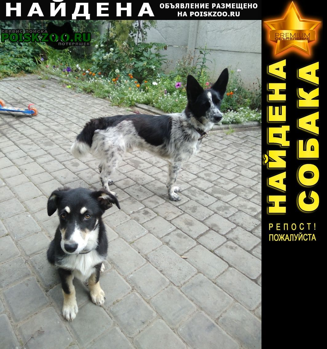 Найдена собака 2 собаки Барнаул