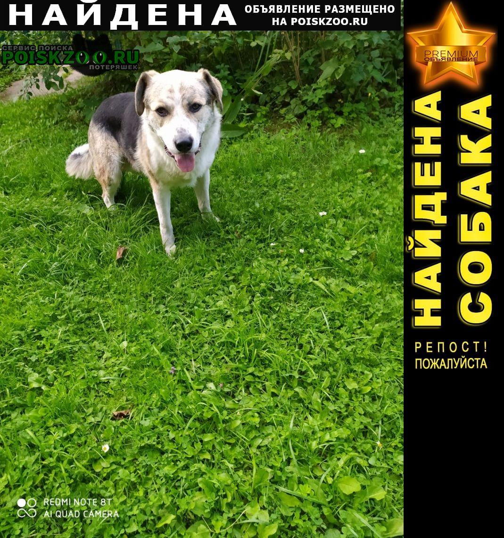 Найдена собака, девочка Истра