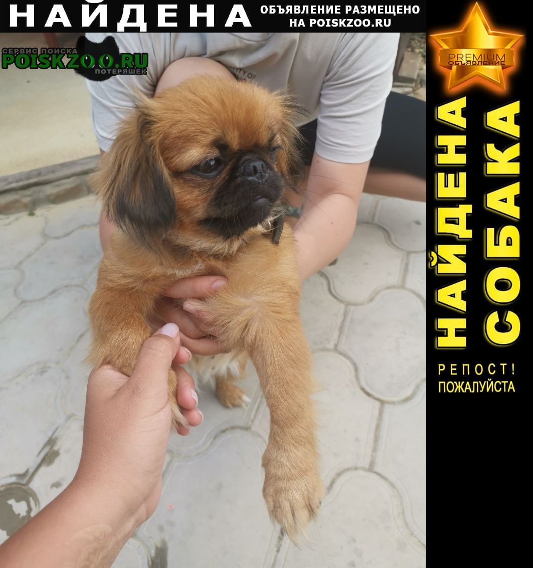 Найдена собака в районе пятихатки Анапа