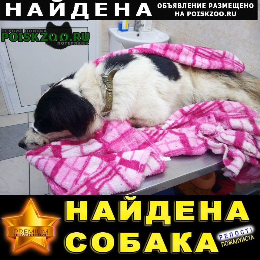 Найдена собака, сука Липецк