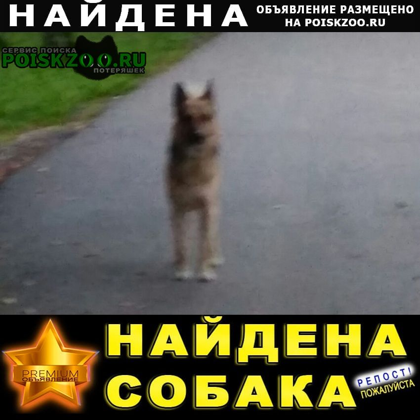 Найдена собака бегает по п. мамонтовка с 27 авг.2020. Пушкино