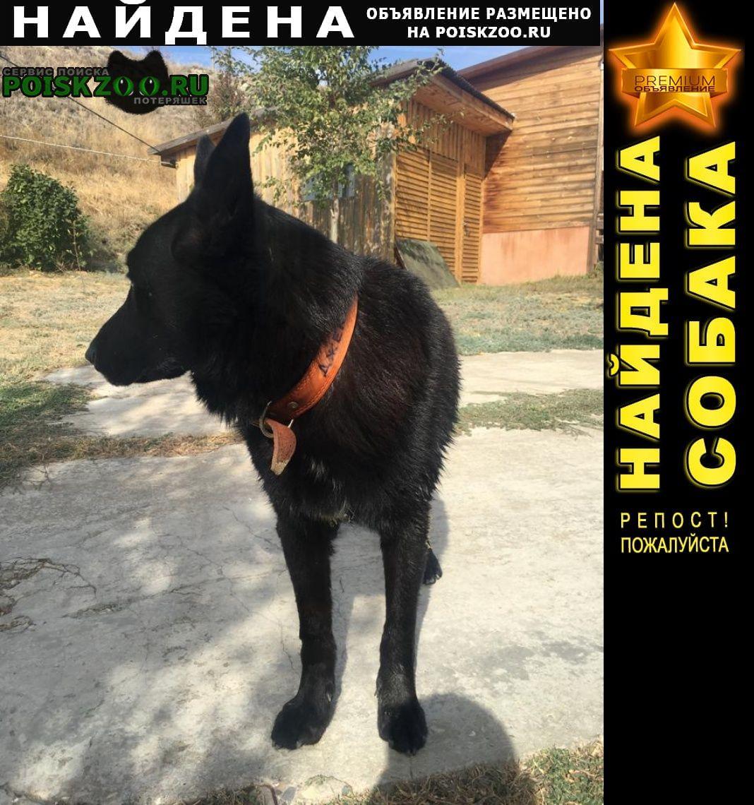 Волгоград Найдена собака  джек