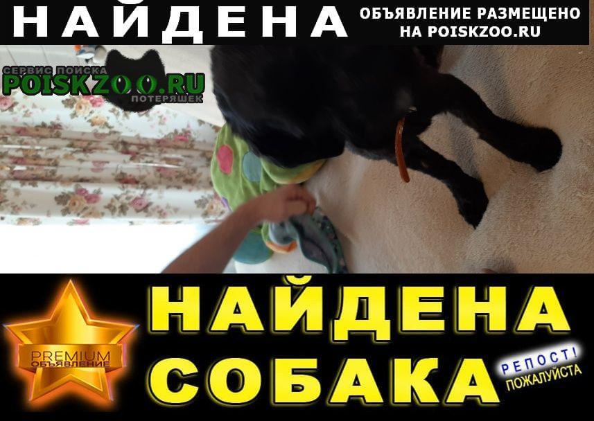 Найдена собака черный терьер Истра