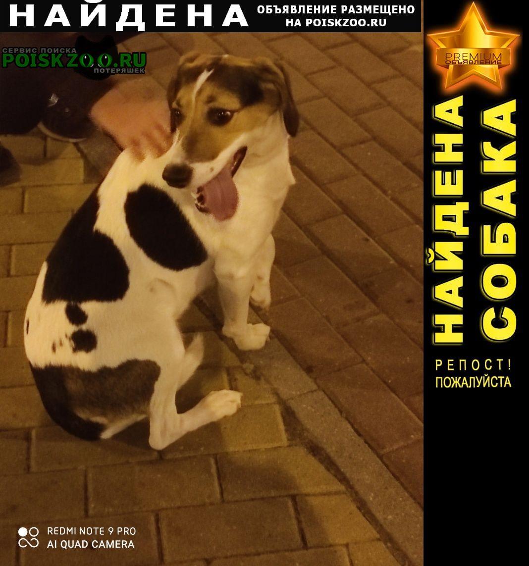 Балашиха Найдена собака