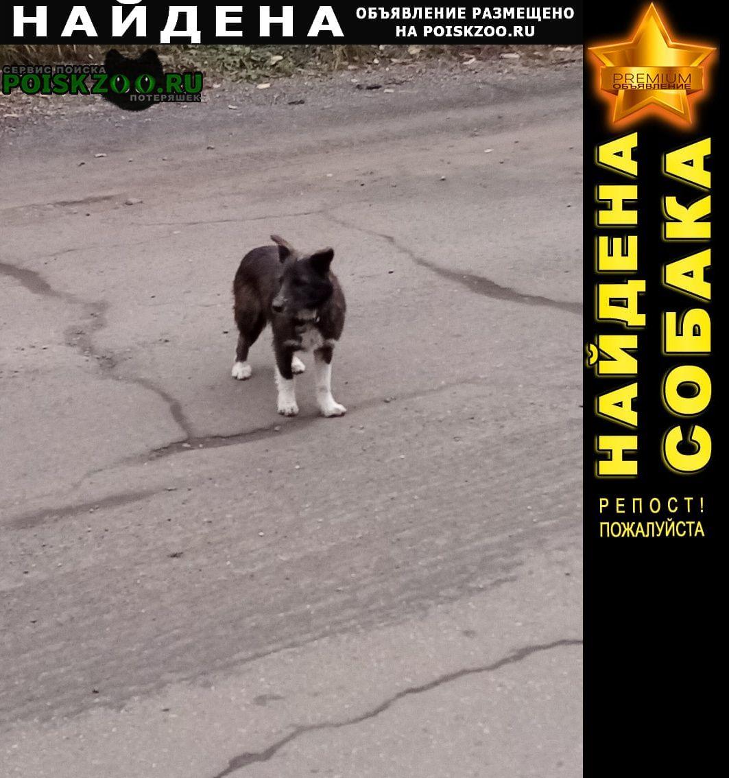 Найдена собака потеряшка или брошенная Иркутск
