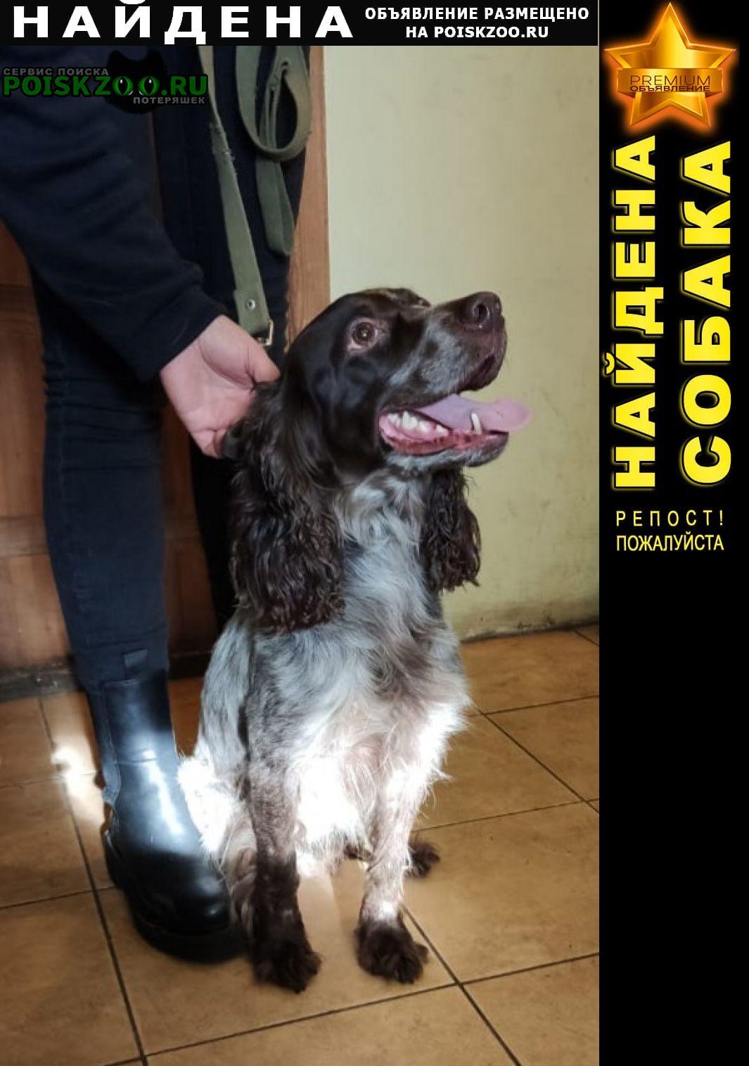Санкт-Петербург Найдена собака спаниель