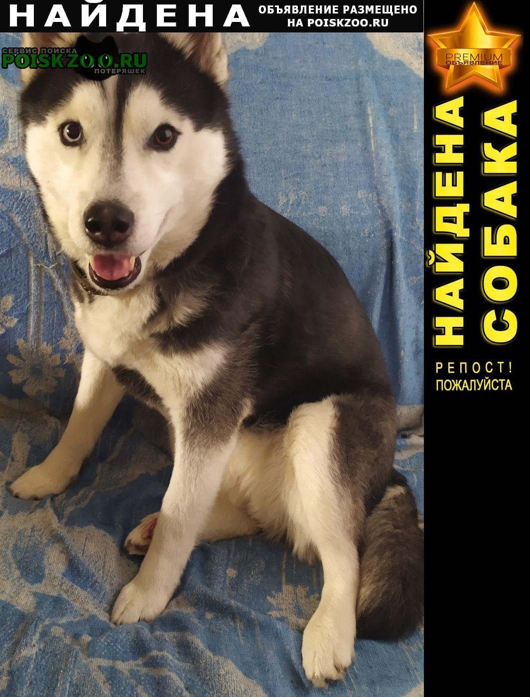 Найдена собака срочно ищем хозяев Томск