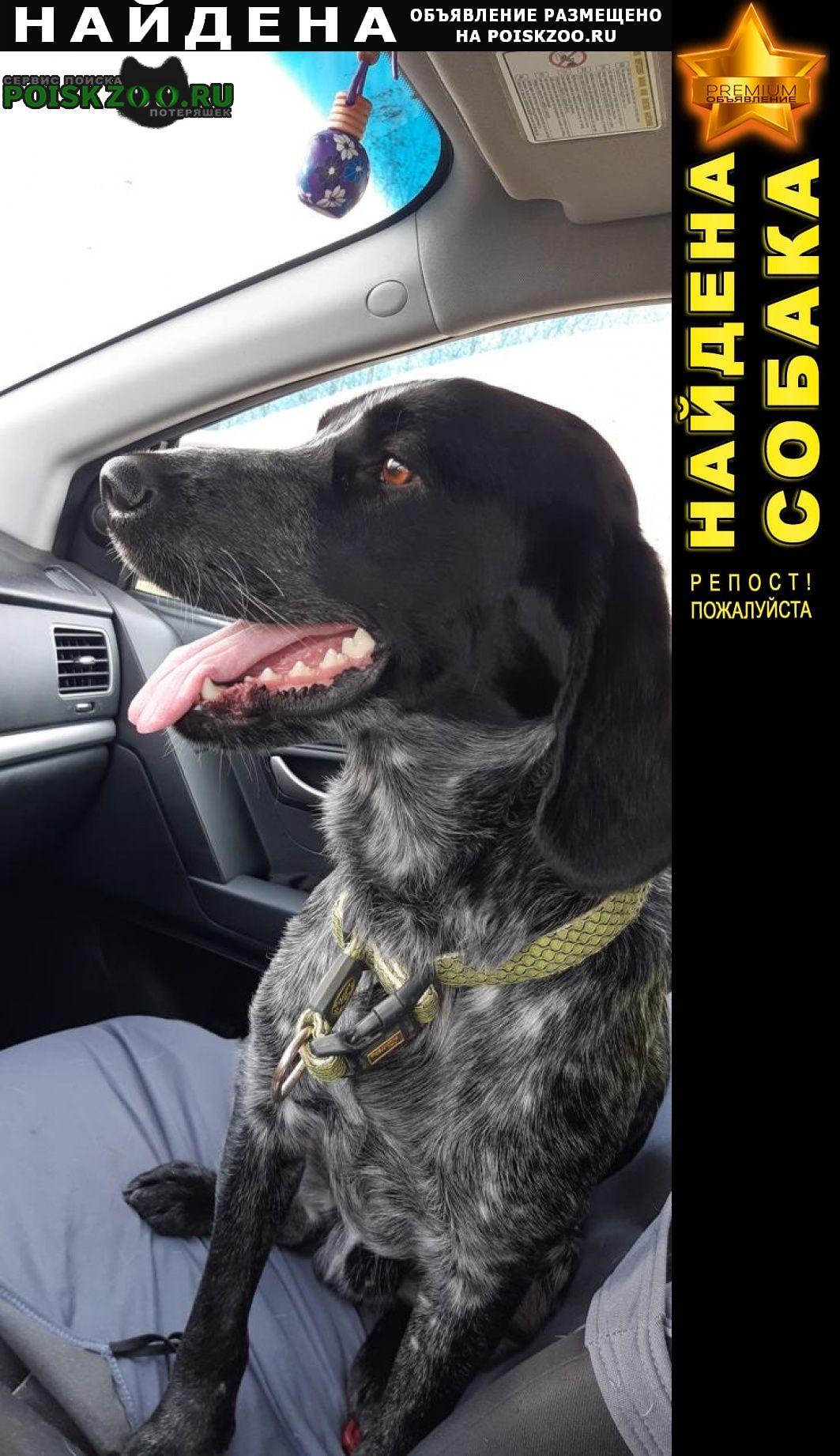 Найдена собака кобель на новорязанском шоссе в конце сентября Воскресенск