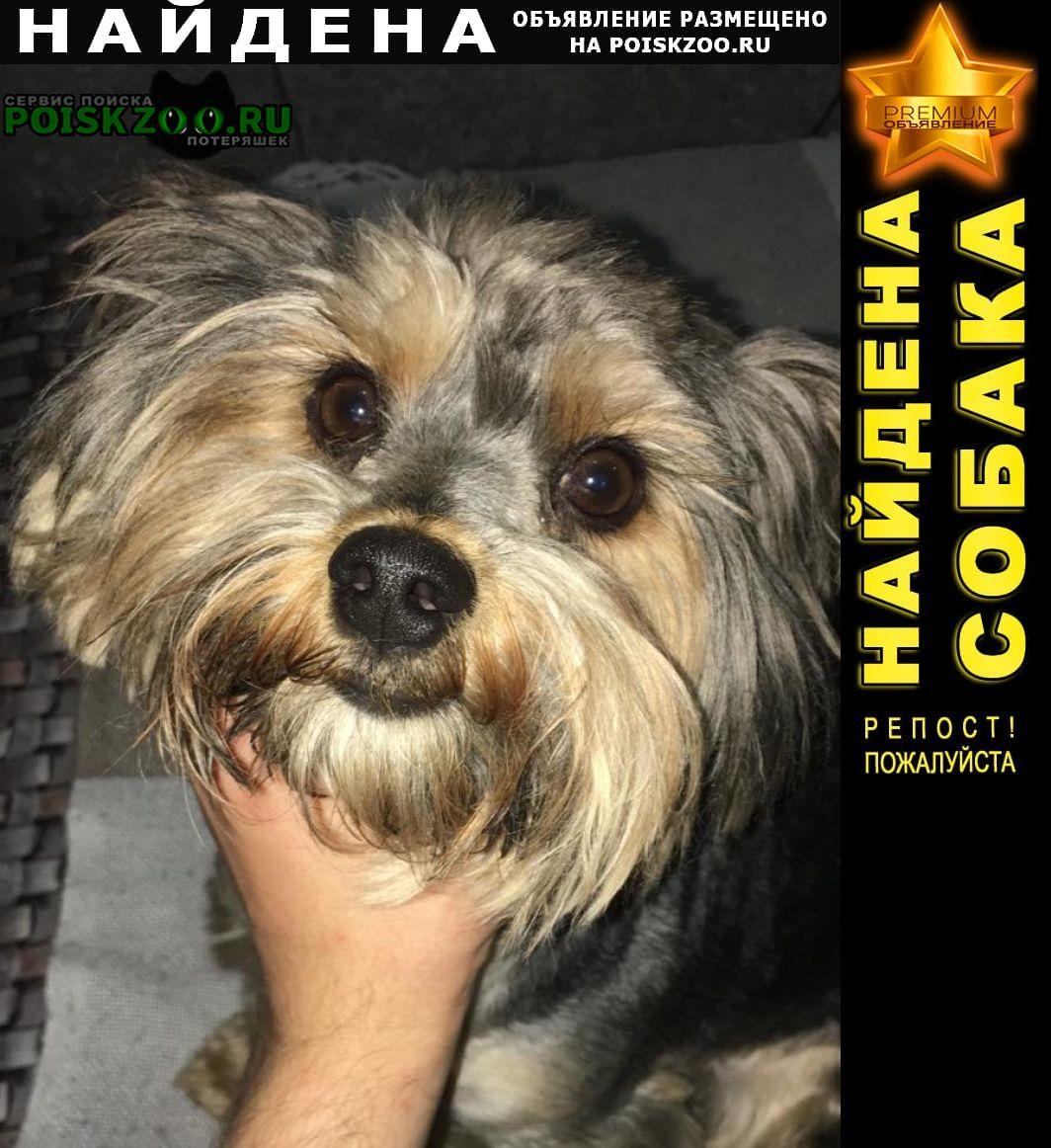 Найдена собака йокшер, вроде смесь Уфа