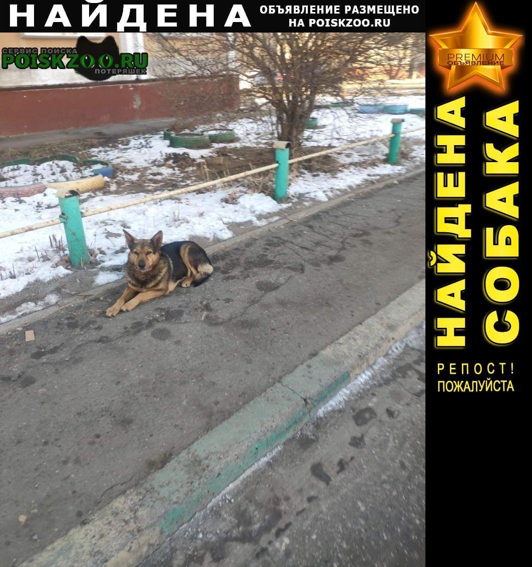 Найдена собака потерявшаяся Нижний Новгород