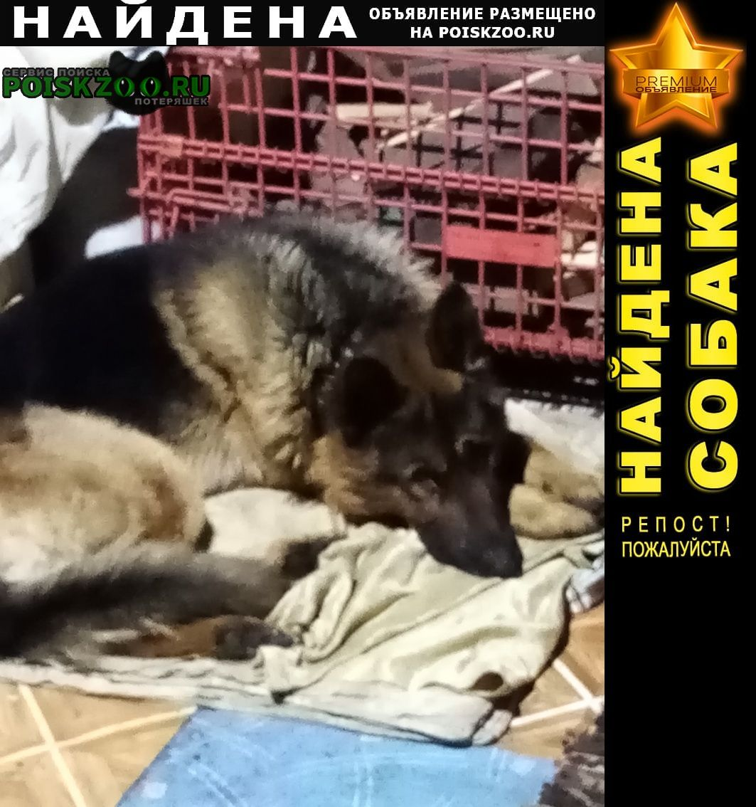Новокузнецк Найдена собака