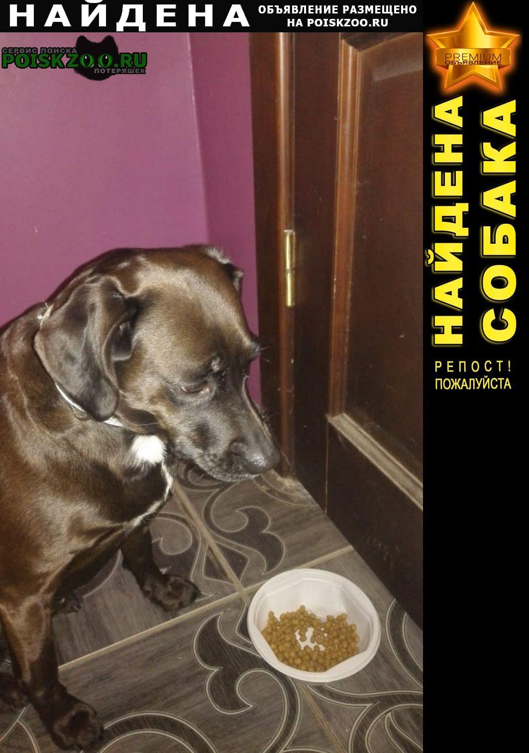 Найдена собака Калининград (Кенигсберг)