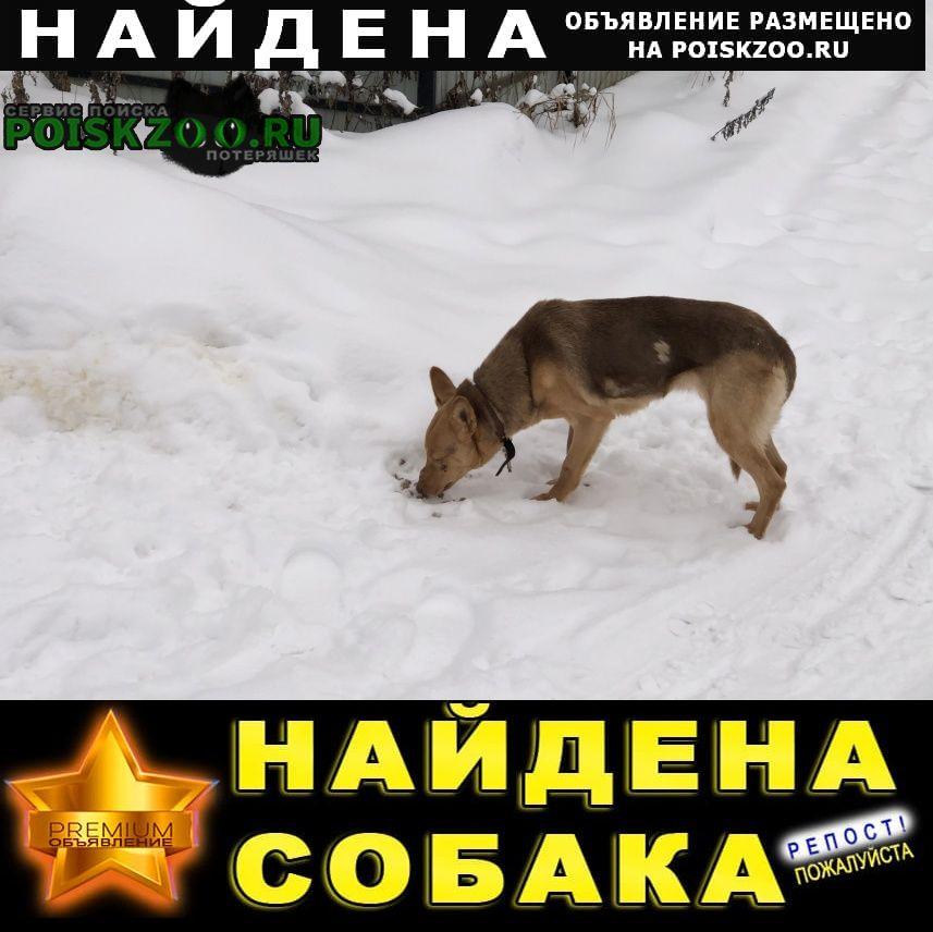 Найдена собака деревня радумля Солнечногорск
