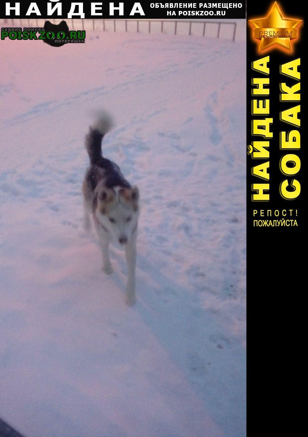 Найдена собака район успенский проспект-огнеупорщиков Верхняя Пышма