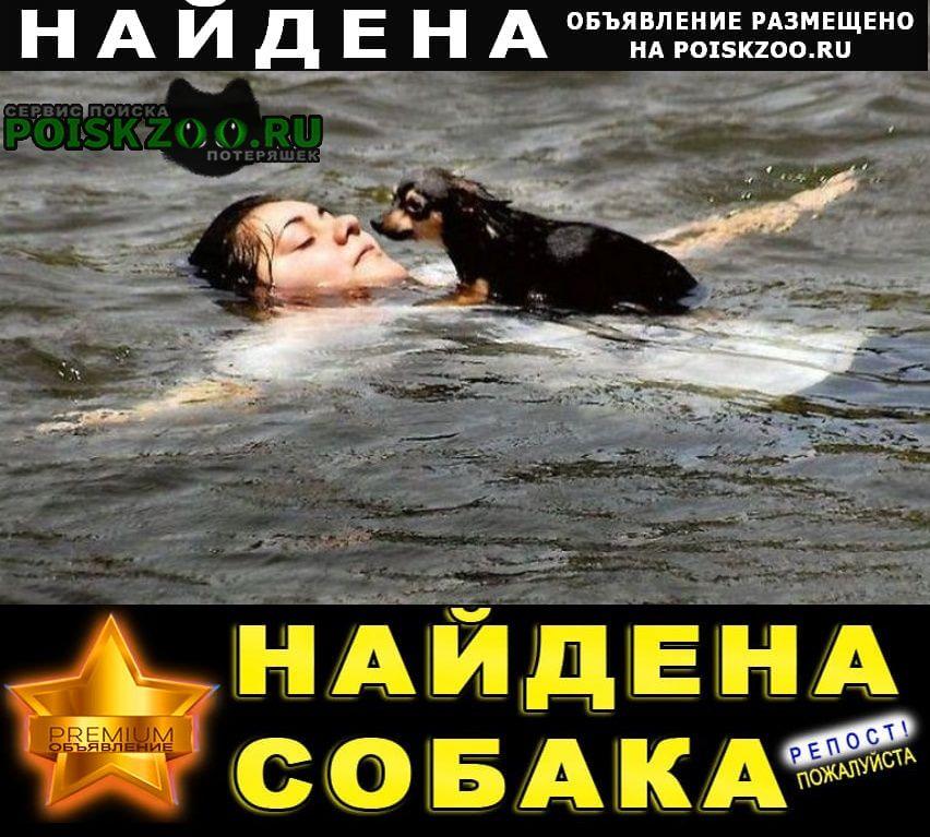 Найдена собака найдем вашего пропавшего домашнего пито Москва