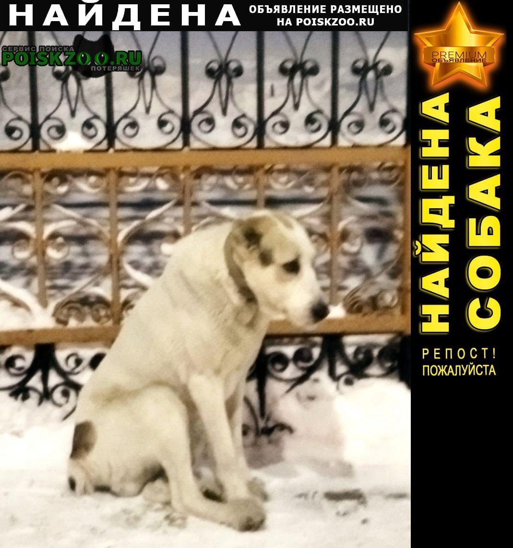 Найдена собака Барнаул