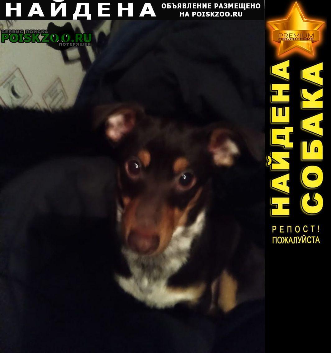 Томск Найдена собака