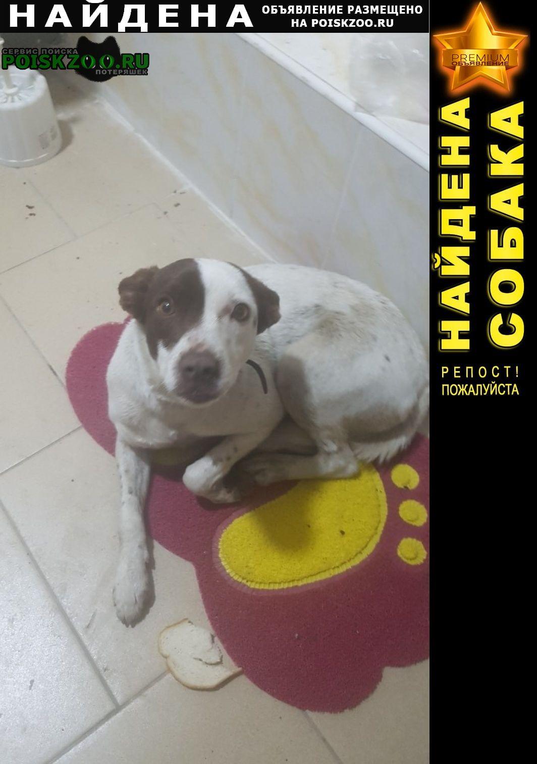 Найдена собака по ул. песчаная 21 самка молодая Ростов-на-Дону