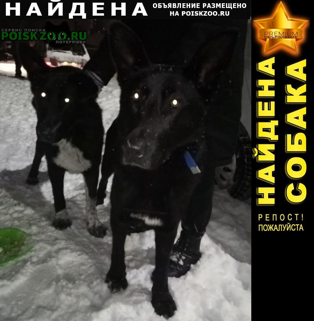 Найдена собака ищем новых хозяев Петрозаводск