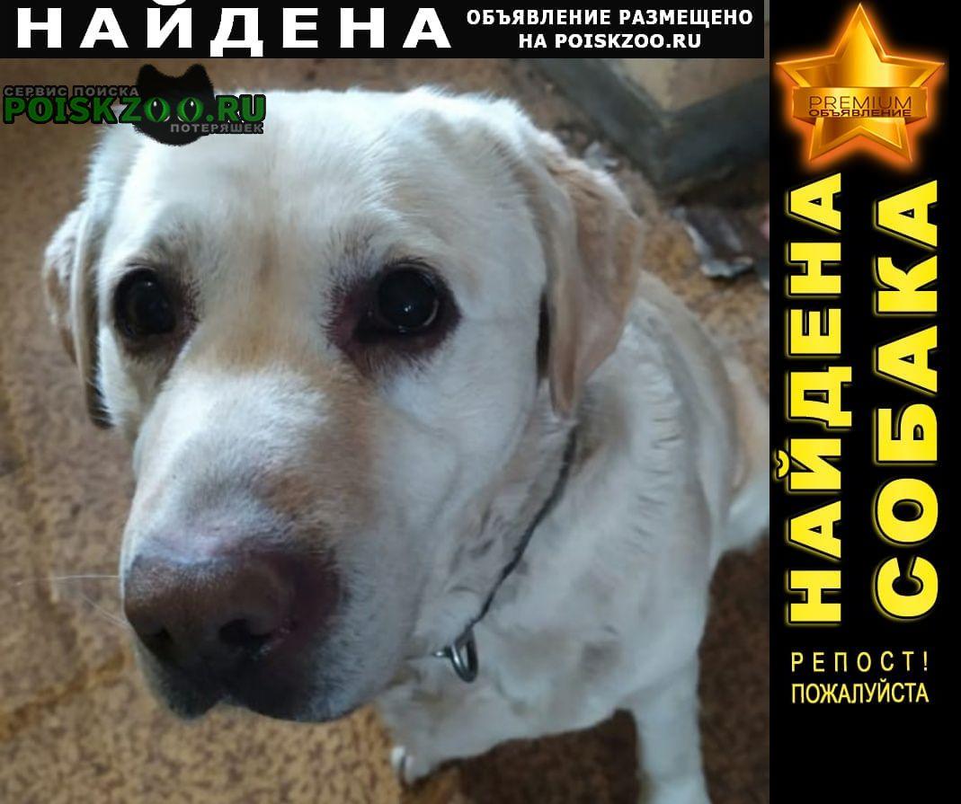 Найдена собака сука. район виз Екатеринбург