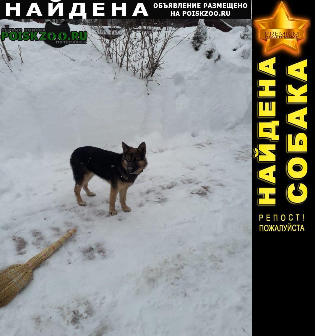 Найдена собака Клин