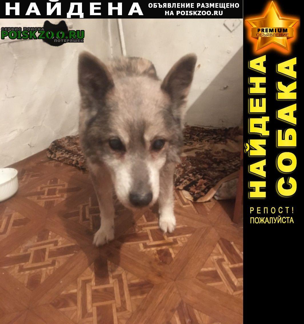 Найдена собака сучка, старенькая, серая, подслеповатая Красноярск