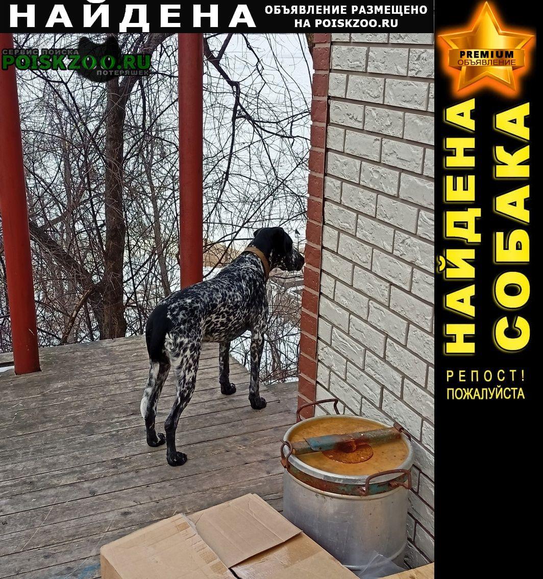 Найдена собака Хабаровск