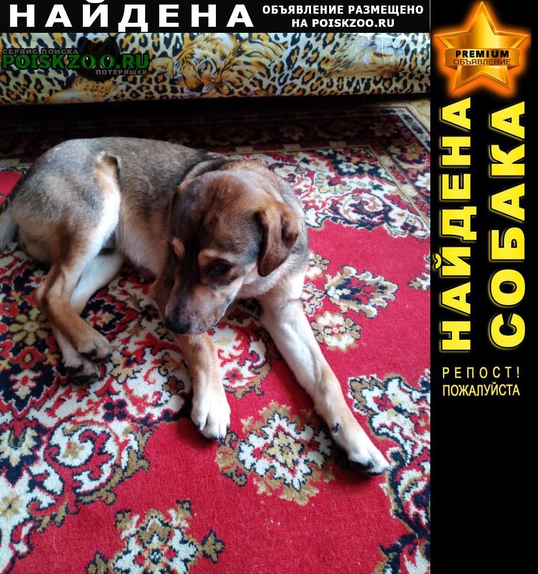 Найдена собака молодой пёс Краснодар