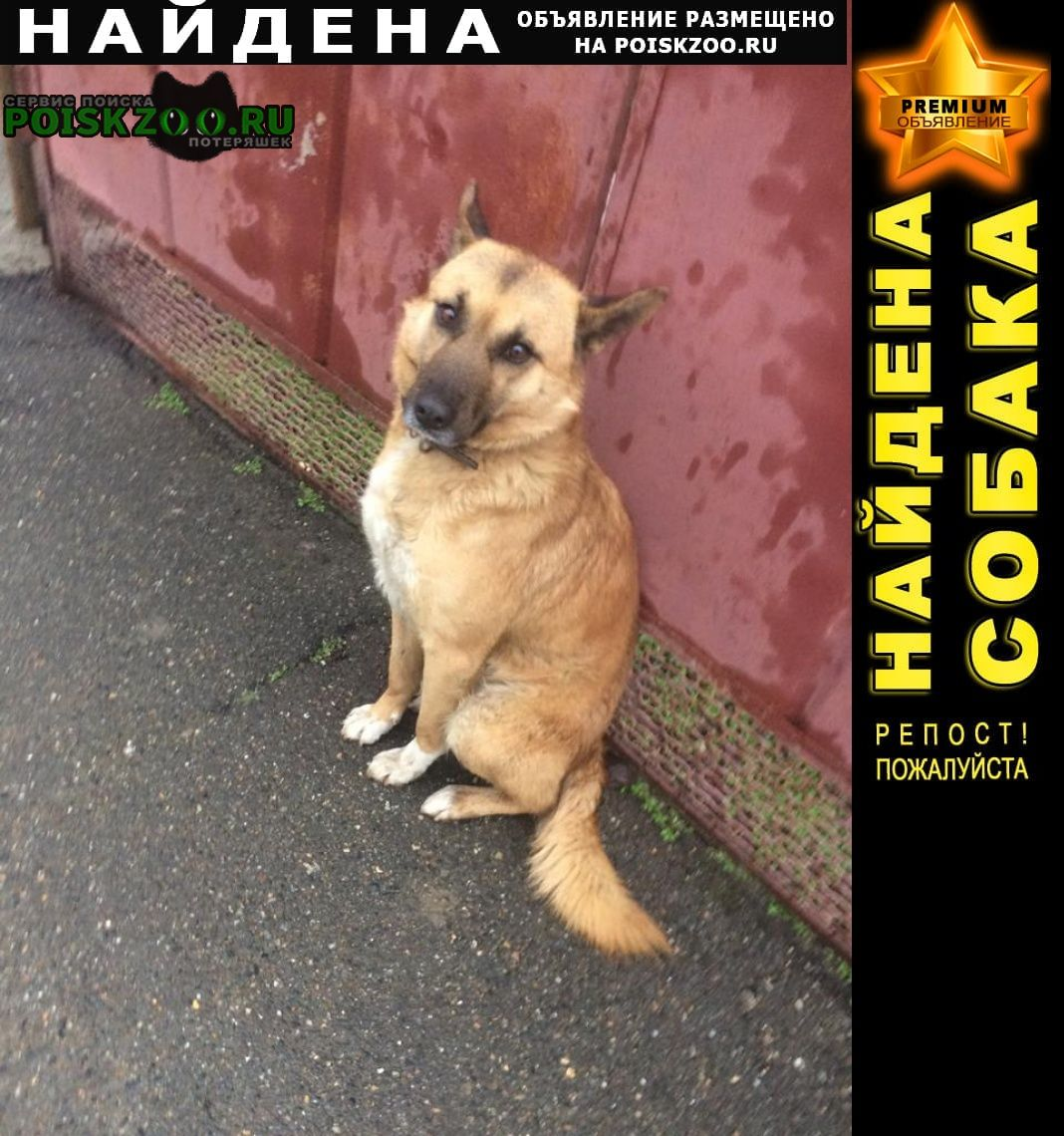 Найдена собака кобель Краснодар