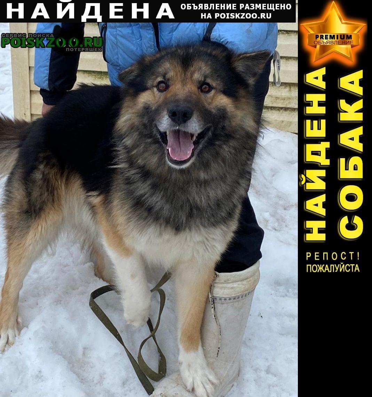 Найдена собака кобель Вороново