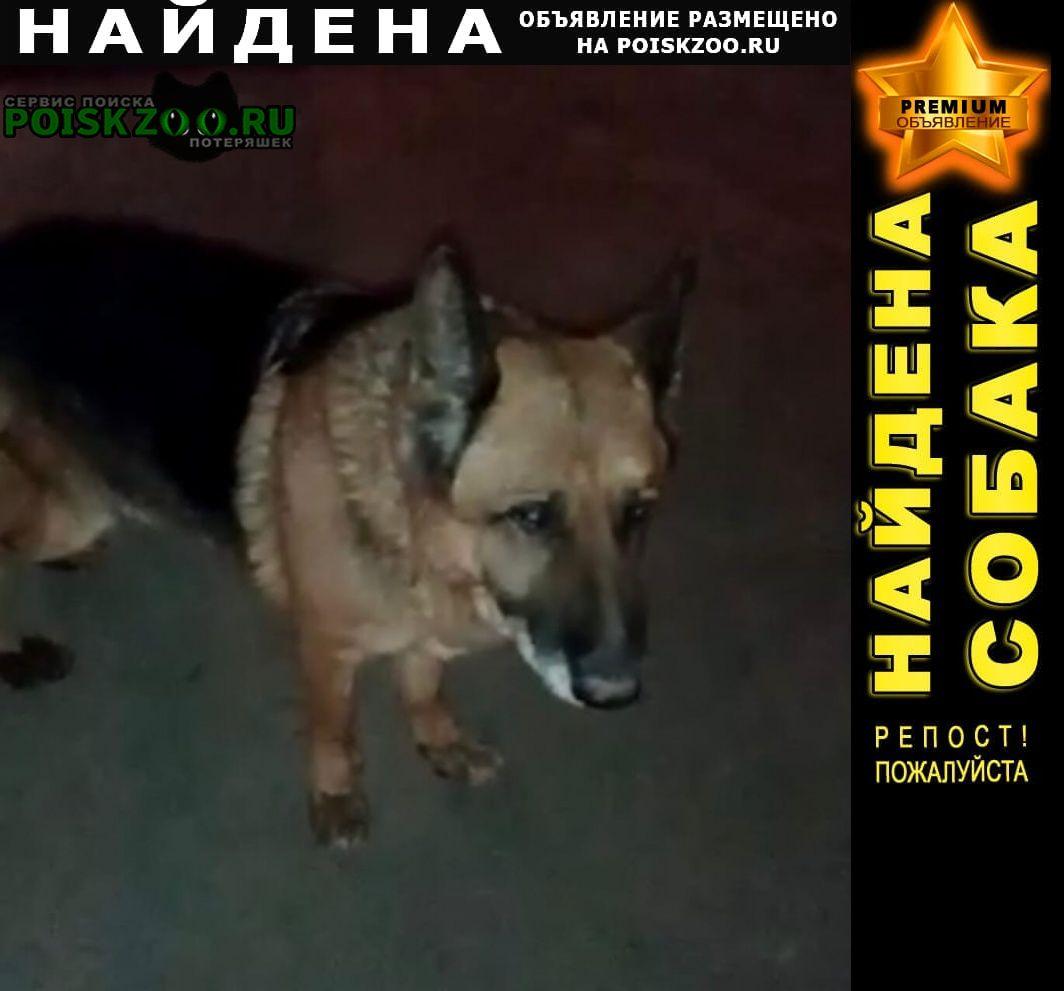 Найдена собака Ростов-на-Дону