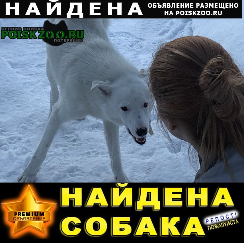 Найдена собака кобель белая собака Одинцово