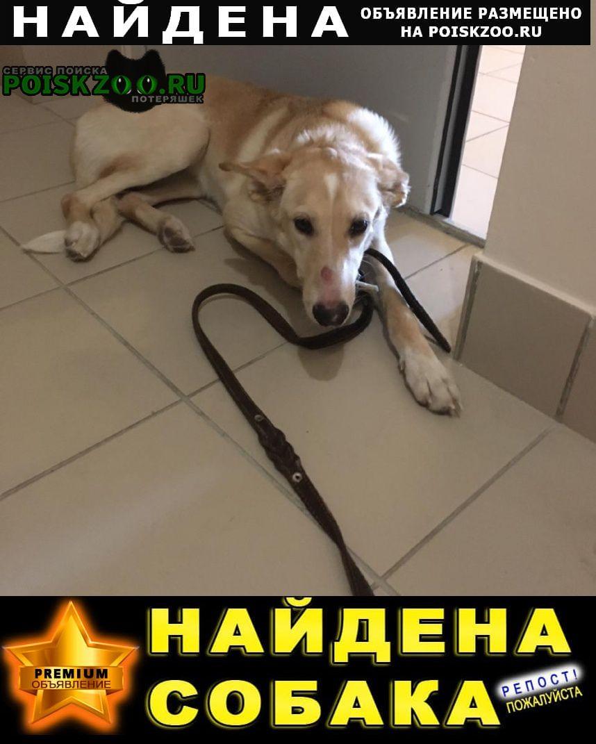 Найдена собака с ошейником Челябинск