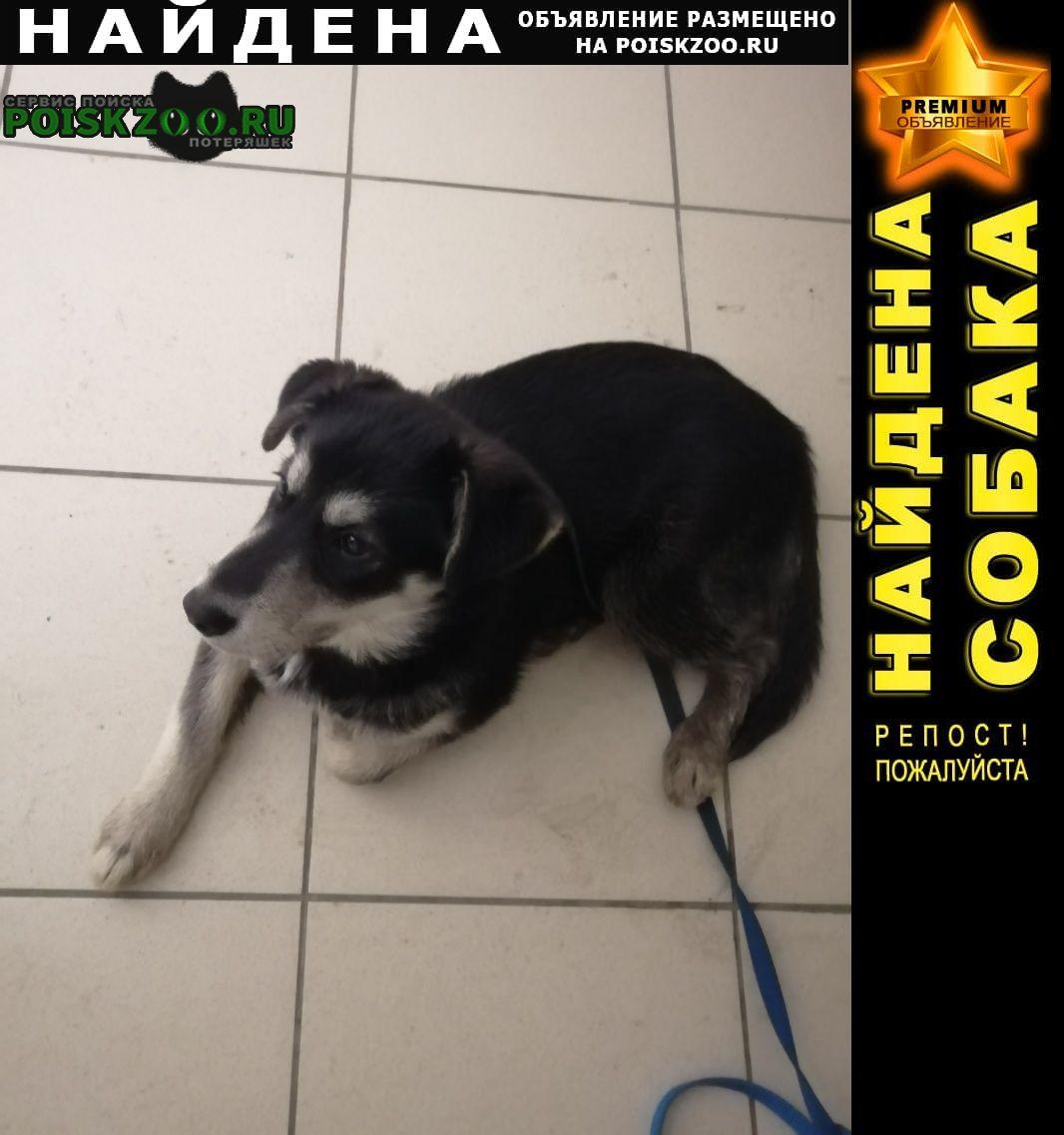 Найдена собака не можем оставить у себя Казань