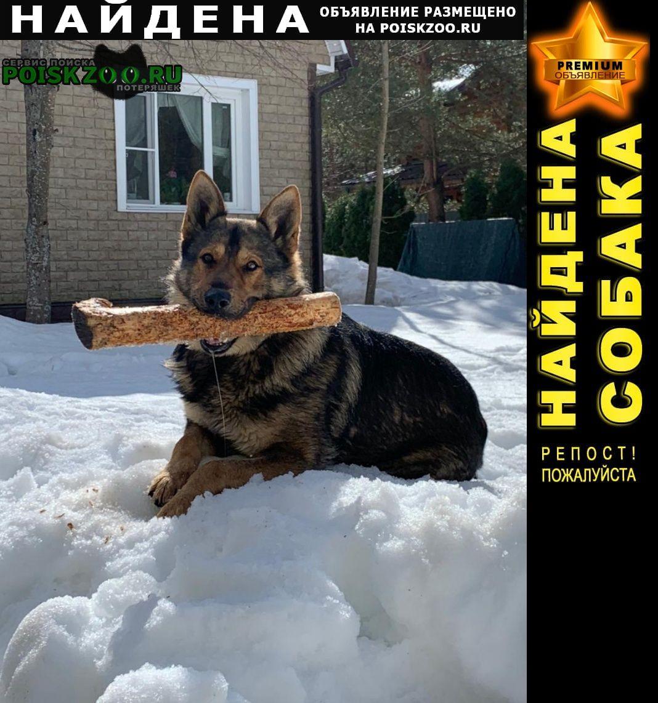 Найдена собака Вороново