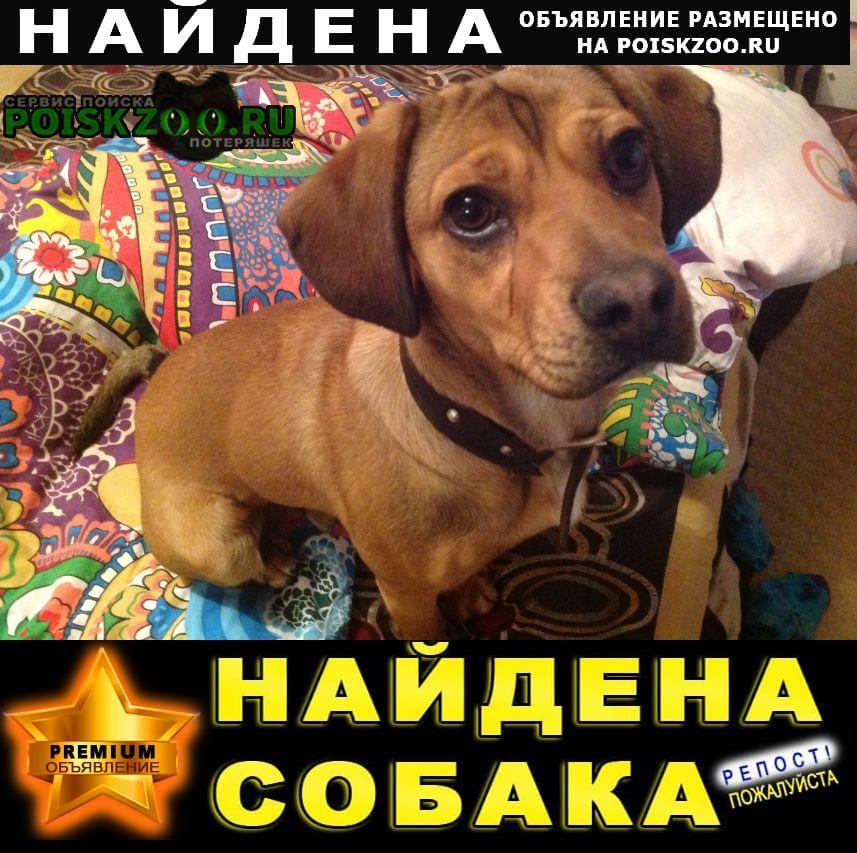 Белгород Найдена собака кобель прибился мальчишка 26 апреля в районе сп