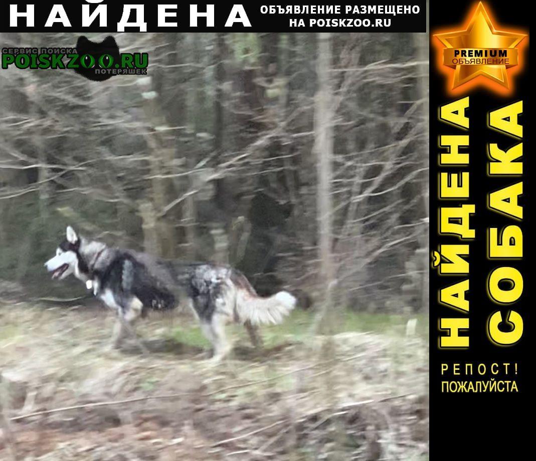 Найдена собака тимонино Апрелевка