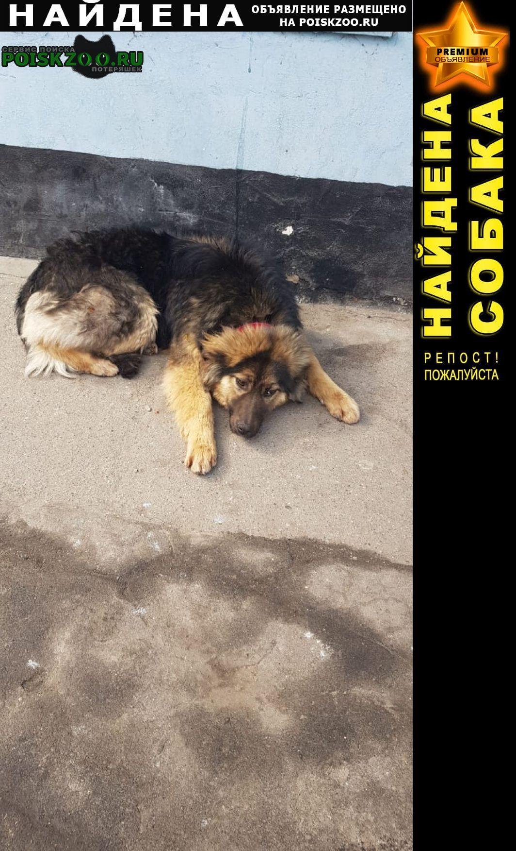 Найдена собака очень добрая, ласковая собачка. Москва