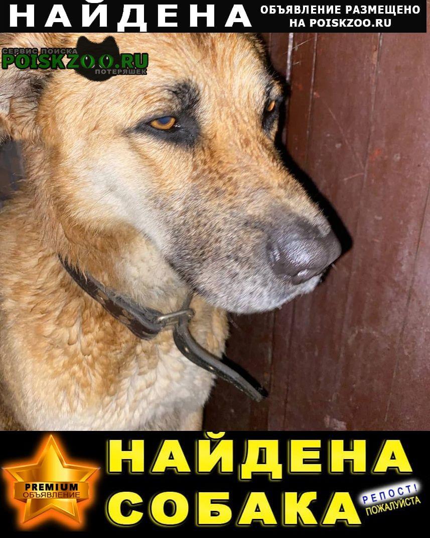 Найдена собака кобель мальчик с кожаным ошейником Щелково