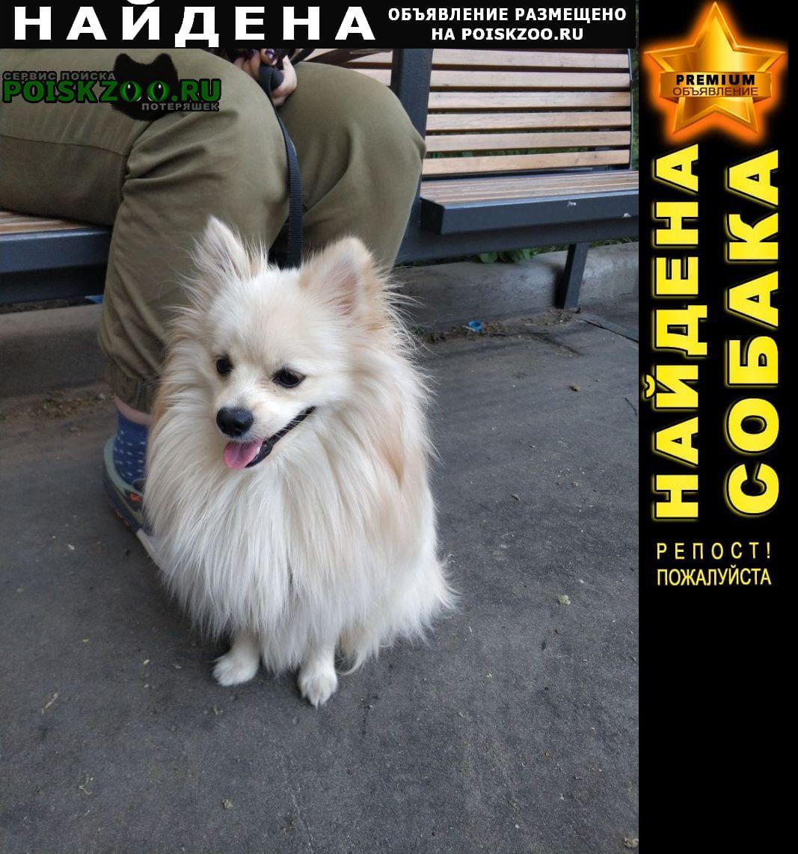 Найдена собака кобель породы шпиц Москва
