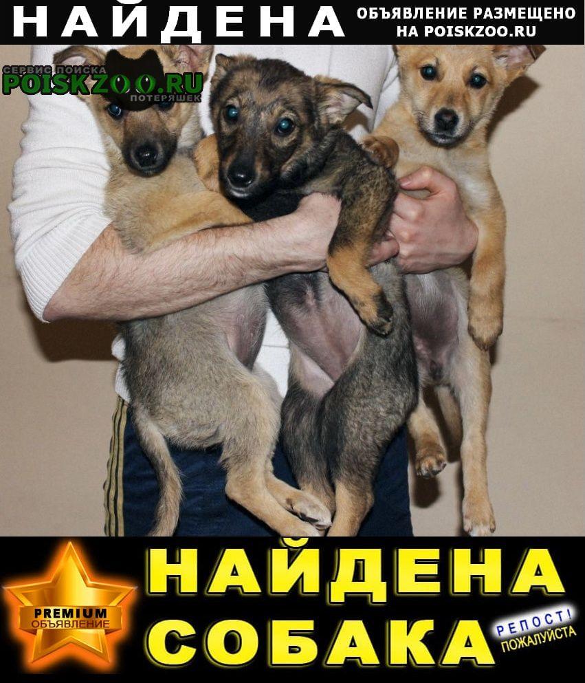 Найдена собака отдам щенки басплатно в дар Краснодар